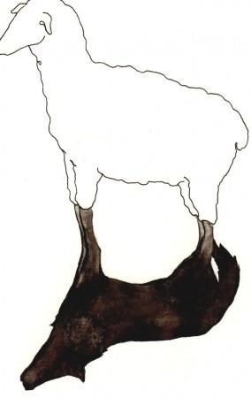 Pecora, disegno di Davide Racca