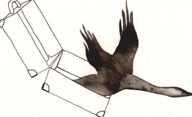 Uccelli migratori, disegno di Davide Racca
