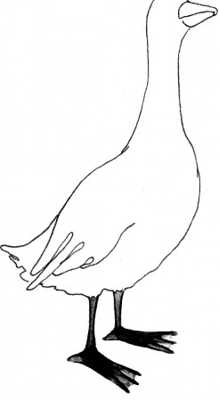 Oca - Disegno di Davide Racca