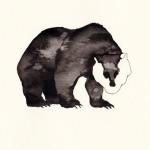 RACCA orso