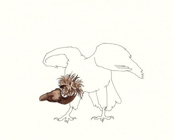 RACCA Avvoltoio