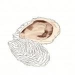 l'ostrica