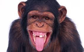 morelli scimmia